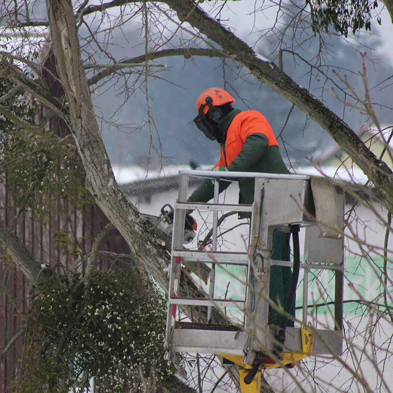Tree Removal Gallery Tree Cutting Services